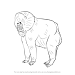 How to Draw a Mandrill