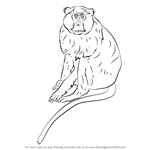How to Draw a Patas Monkey