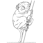 How to Draw a Philippine Tarsier