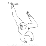 How to Draw a Siamang
