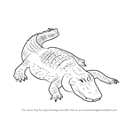 How to Draw an American alligator