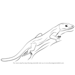 How to Draw a Bedriaga's Rock Lizard