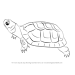 How to Draw a Bog Turtle