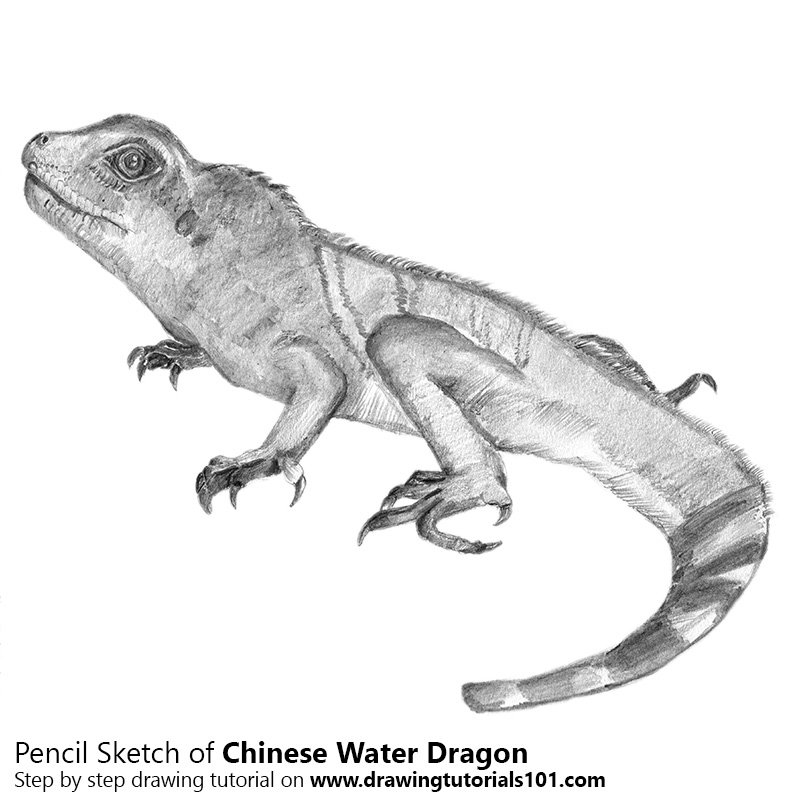 Pencil Sketch of Chinese water dragon - Pencil Drawing