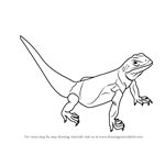How to Draw a Chuckwalla