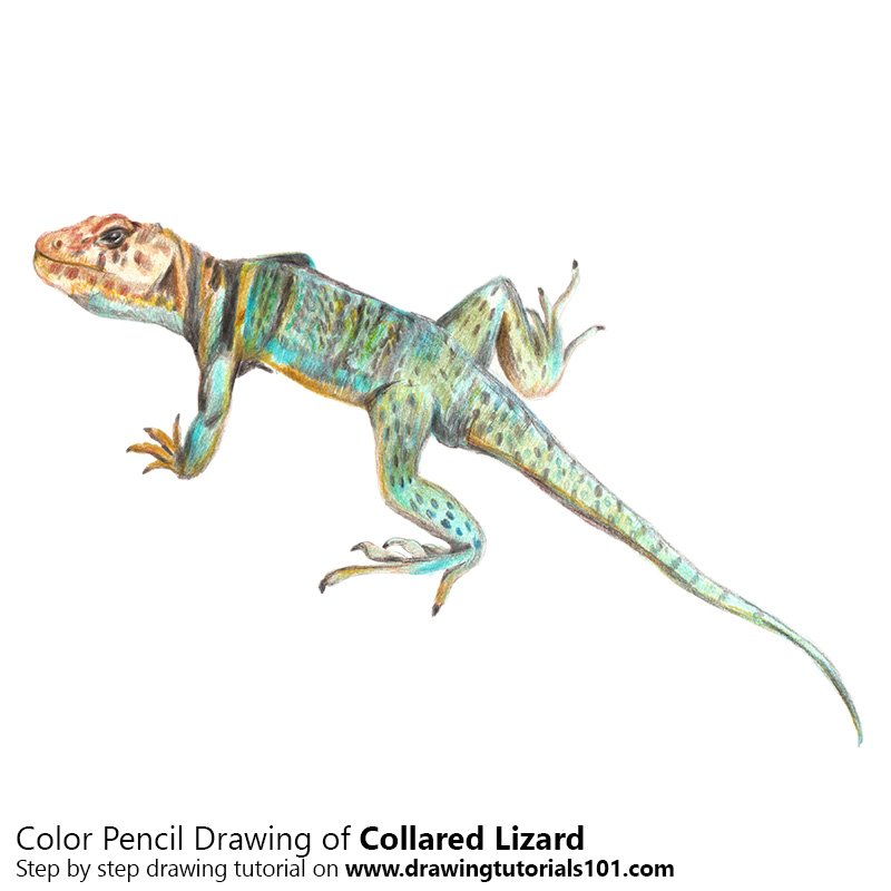 Collared Lizard Color Pencil Drawing