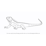How to Draw a Iguana