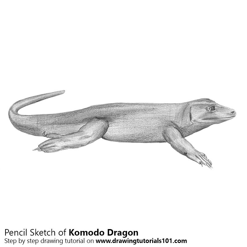 Pencil Sketch of Komodo Dragon - Pencil Drawing