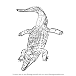 How to Draw a Nile Crocodile
