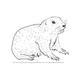 How to Draw a Baby Prairie Dog
