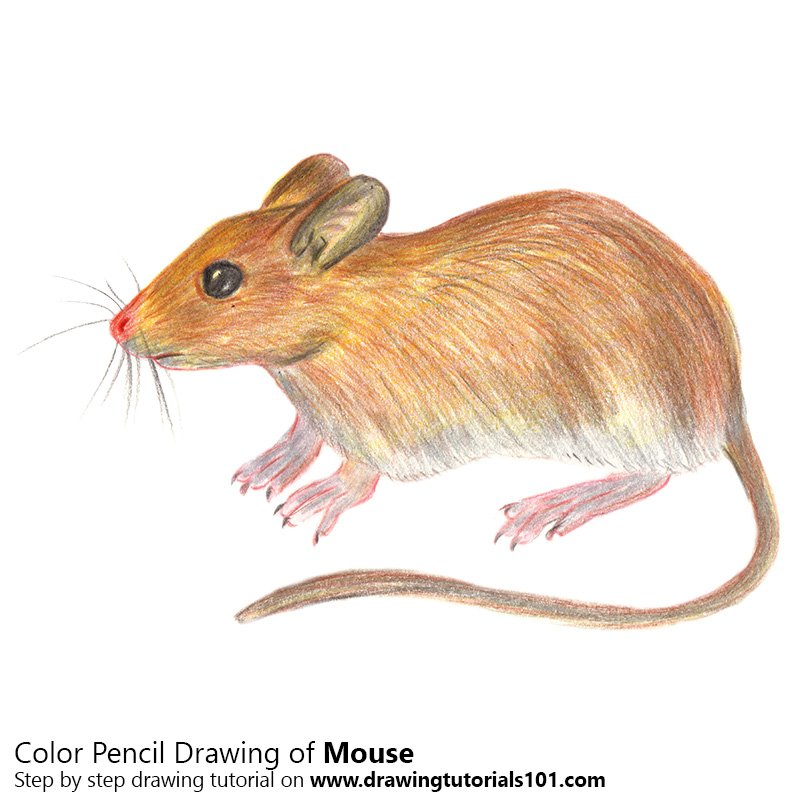 Mouse Color Pencil Drawing