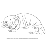 How to Draw a Naked Mole Rat
