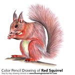 How to Draw a Red Squirrel