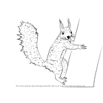 How to Draw a Squirrel Climbing a Tree
