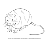 How to Draw a Water Rat