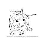 How to Draw a Wood Mouse