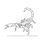 How to Draw an Emperor Scorpion