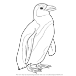How to Draw an African Penguin
