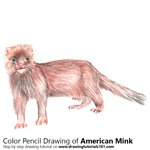 How to Draw an American Mink