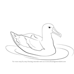 How to Draw a Albatross