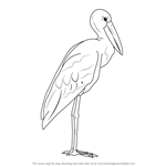 How to Draw an Asian Openbill