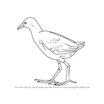 How to Draw a Black Crake