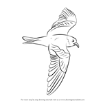 How to Draw a Markham's storm petrel