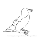 How to Draw a Razorbill