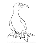 How to Draw a Red-Footed Booby