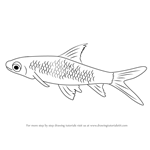 How to Draw a Silver Shark