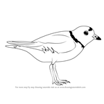 How to Draw a Piping Plover