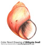 How to Draw a Bithynia Snail