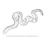 How to Draw a Kenyan Sand Boa