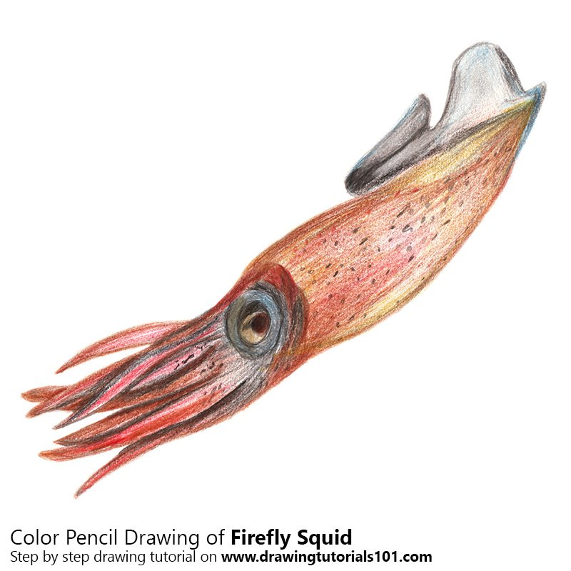 Firefly Squid Color Pencil Drawing