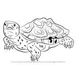 How to Draw a Diamondback Terrapin