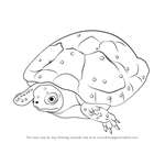 How to Draw a Spotted Turtle