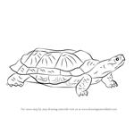 How to Draw a Wood Turtle