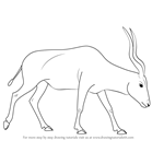 How to Draw an Addax