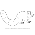 How to Draw an African Bush Squirrel