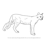 How to Draw a African Golden Cat