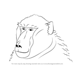 How to Draw a Baboon Face