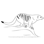 How to Draw a Banded Mongoose