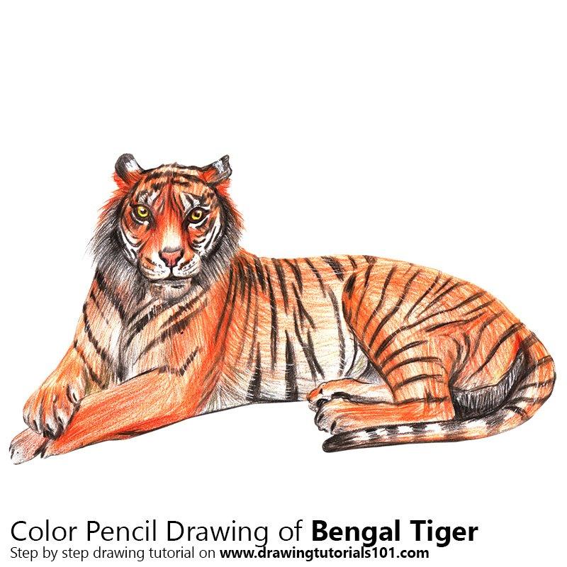 Bengal Tiger Color Pencil Drawing