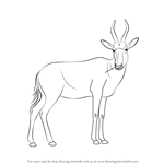 How to Draw a Blesbok