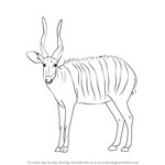 How to Draw a Bongo Antelope