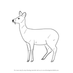 How to Draw a Chinese Water Deer