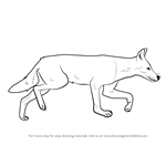 How to Draw an Ethiopian Wolf