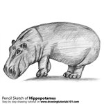 How to Draw a Hippopotamus