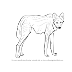 How to Draw a Maned Wolf