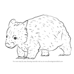 How to Draw a Northern Hairy-Nosed Wombat